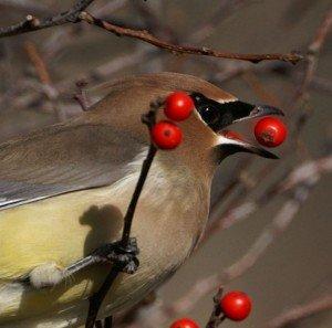 Lanny McDowell Avian Art