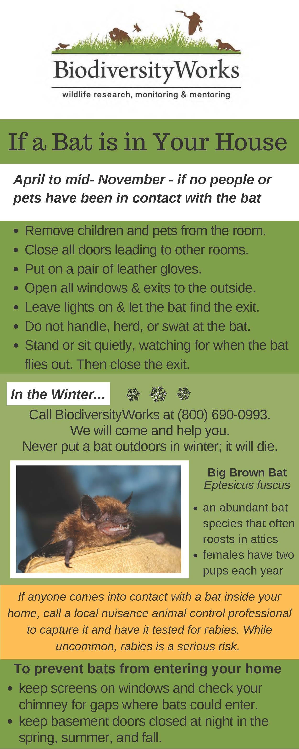 Have A Bat In Your House Click Here