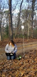 Checking data from a bat detector in the field